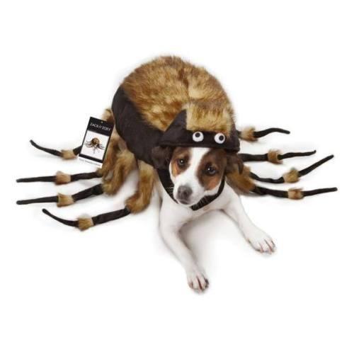 [TARANTULA Fuzzy Spider Dog Halloween Costume, ALL SIZES Zack & Zoey (Medium) by Zack & Zoey] (Halloween Spider Costumes)