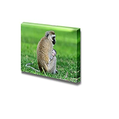 Canvas Prints Wall Art - Vervet Monkey Sitting with Baby | Modern Wall Decor/Home Decoration Stretched Gallery Canvas Wrap Giclee Print. Ready to Hang - 16