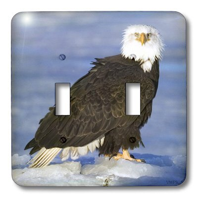 3d Rose 3dRose lsp_45706_2 Bald Eagle with Fluffy Feather...