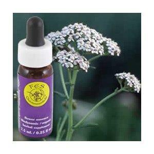 Services Flower Essence - Yarrow essence de fleur - 0,25 oz (Multi-Pack)