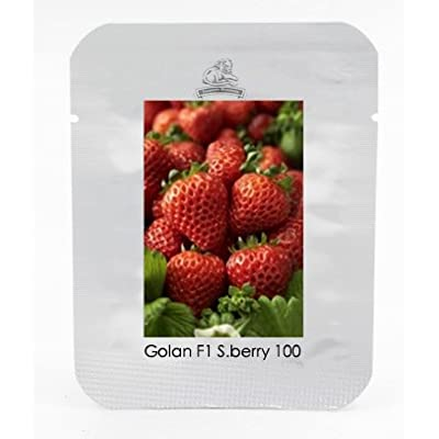 Golan F1 Strawberry Seeds, 1 Professional Pack, 100 Seeds / Pack, Delicate Flavour Conical Shape Strawberry #NF546 : Garden & Outdoor
