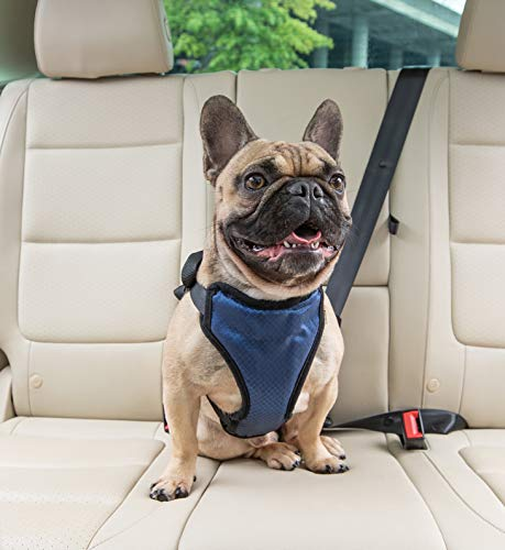 PetSafe Happy Ride Certified, Crash-Tested, Comfortable, Durable, Dog Safety Harness, Medium 0.5' Cat Safety Collar