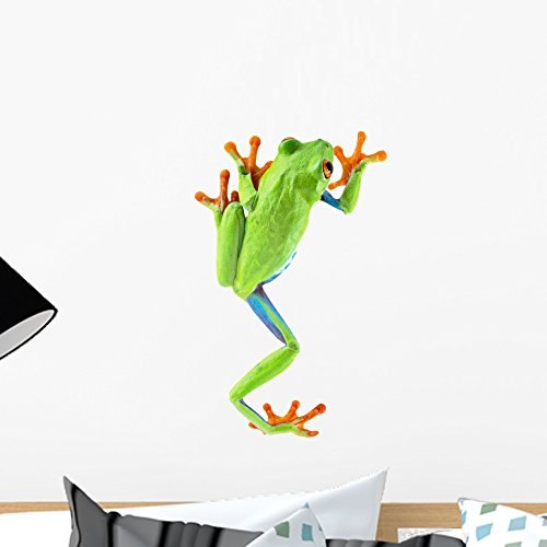 - Wallmonkeys Red Eyed Tree Frog Wall Decal Peel and Stick Graphic WM183974 (18 in H x 11 in W)