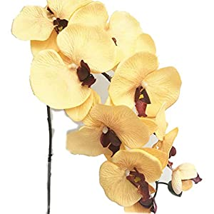 jiumengya 6pcs Champagne Color Moth Orchids Phalaenopsis Orchid Big Orchid Flower Head 10 Heads/Piece for Wedding Decorative Artificial Flowers (Champagne) 69