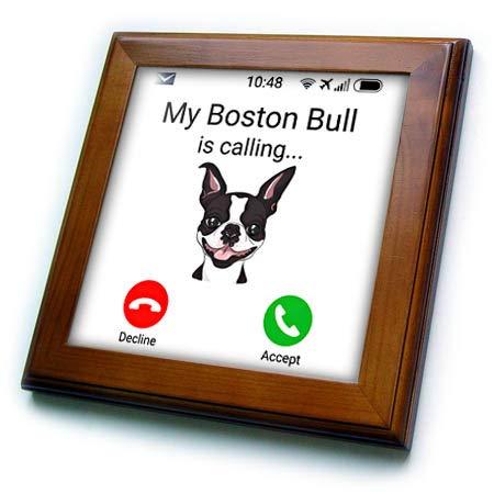 3dRose Carsten Reisinger - Illustrations - My Boston Bull is Calling Funny Incoming Phone Call Holiday Terrier - 8x8 Framed Tile (ft_319391_1)