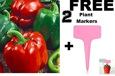Sweet California Wonder Bell Pepper Seeds (Heirloom/organic) 150 Seeds By JaysseedsTM Upc 643451295115 + 2 Free Plant Markers