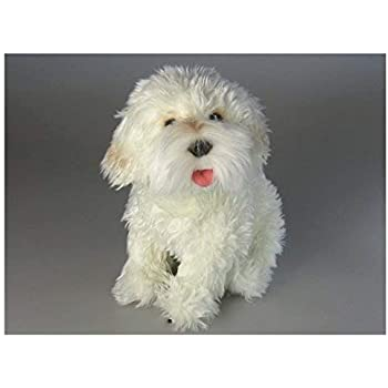 Amazon Com Carl Dick French Poodle White Sitting 10 5 Inches 25cm