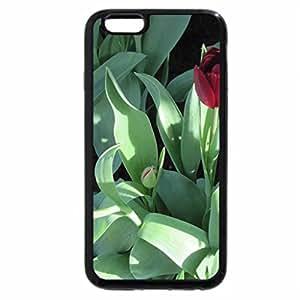iPhone 6S Plus Case, iPhone 6 Plus Case, seasonal celebrations with flowers 12