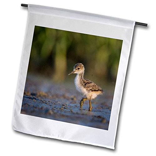 3dRose Danita Delimont - Birds - Black-Necked Stilt Chick forages on a Lakeshore in Eastern Washington. - 18 x 27 inch Garden Flag (fl_315140_2)