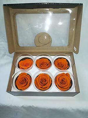 Rosas eternas Naranja. Gratis TU ENVÍO. Rosas preservadas Naranjas ...