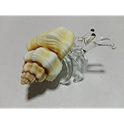 hermit crab glass blowing natural seashell mini conch shells : (Copter shop)