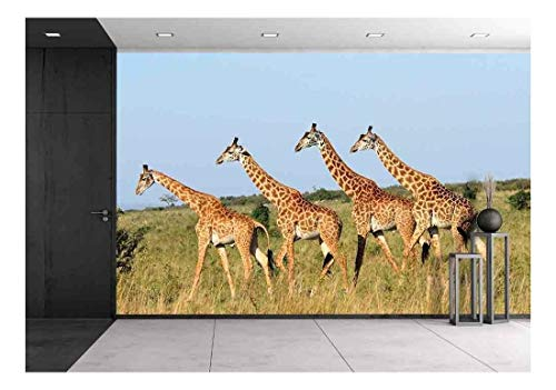 wall26 - Group of Giraffes in The Masai Mara Reserve (Kenya) - Removable Wall Mural | Self-Adhesive Large Wallpaper - 100x144 inches
