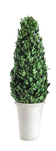 Creative Co-op DA5563 Boxwood Topiary in Clay ()
