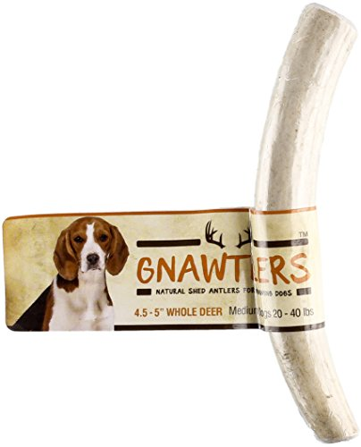Pet Parents Gnawtlers - Premium Deer Antlers for Dogs, Naturally Shed Deer Antlers, All Natural Deer Antler Dog Chew, Specially Selected from The Heartland Regions - 4.5