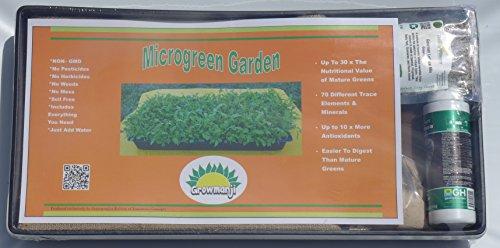 Hydroponic Microgreens Growing Kit - Kale (1 Standard Kit...