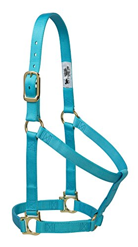 Weaver Leather Basic Non-Adjustable Nylon Horse Halter, Turquoise, 1