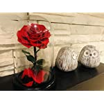 Dakotan-Forever-Rose-Eternal-Rose-with-Real-Fallen-Petals-in-Luxury-Glass-Dome-with-Wooden-Base-and-Elegant-Gift-Box-Gift-for-Valentines-Day-Mothers-Day-Wedding-Anniversary-Birthday-RED
