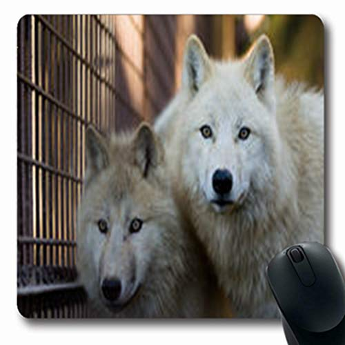 (Pandarllin Mousepads Untamed Two Arctic Wolfs Canis Carnivore Lupus Arctos Wildlife Wolf Nature Undomesticated Oblong Shape 7.9 x 9.5 Inches Oblong Gaming Mouse Pad Non-Slip Rubber Mat)