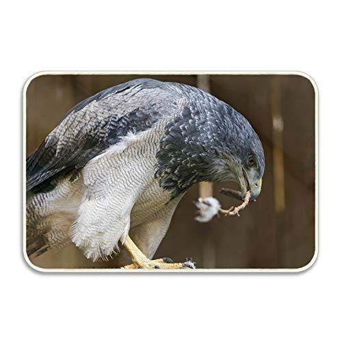 Ranhkdn Personality Anti Slip Welcome Door Mat Animal Falcon Birds of Prey Entrance Doormat Indoor Outdoor for Home ()