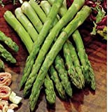 Jersey Knight Asparagus Hybrid 30 Seeds #0613 Item Upc#650348692537