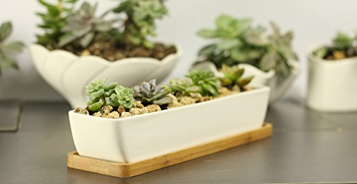 11.1 inch long rectangle White Ceramic Succulent Planter Pots / Mini Flower Plant Containers with Bamboo Saucers. Product size:11.1x2.36x1.77inch. (long rectangle) (Rectangular Ceramic Planter)