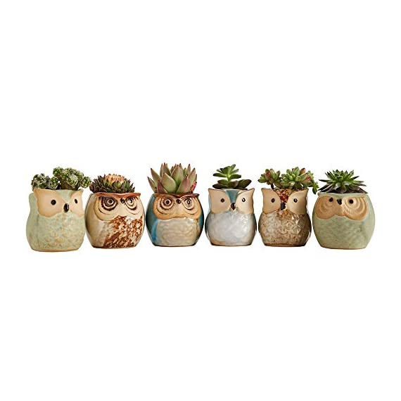 Sun-E 2.5 Inch Owl Pot Ceramic Flowing Glaze Base Serial Set Succulent Plant Pot Cactus Plant Pot Flower Pot Container Planter Bonsai Pots with A Hole Perfect Gift Idea 6 in Set 4 New SUN-E collections!OWL OWL OWL!!!Ideal for adding a dash of refreshingly modern design to your home,Great Gift - this ceramic pot can serve a variety of purposes. Perfect gift for family and friends who love succulent plants with a green thumb or keep it in your own home for a touch of clean, modern style in your living space. Material:Ceramic(Made of top-quality clay and baked in high temperatures);Package content:6pcs*Pot. Approximate Size: 2.2 x 2.2 x 2.4 inch (L x W x H).