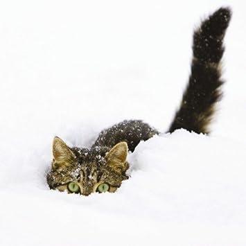 Bildergebnis für katzen schnee