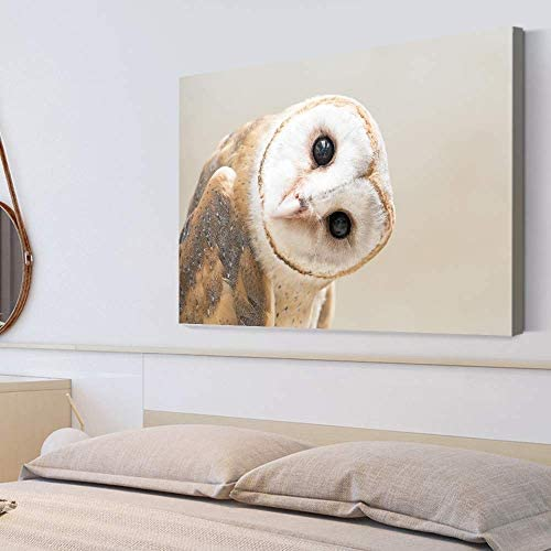Adorable Funny Owl Painting Wall Poster Decor for Living Room Framed