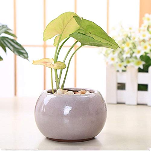 (Zamtac Chinese Style Ice Crack Porcelain Bonsai Pots for Succulent Plants Home and Garden Decorative Planter Flower Pots Ceramic - (Color: White))