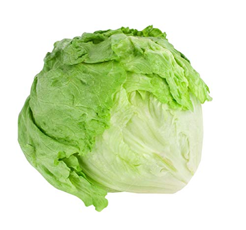 Iceberg Lettuce Seeds - Fall Crop and Cool Season Planting