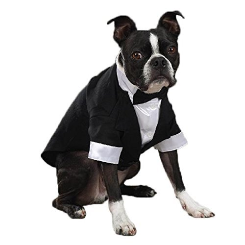 East Side Collection ''Yappily Ever After'' Groom's Tuxedo for Dogs, 12'' Small by East Side Collection