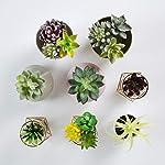 Convenient-Creations-Artificial-Succulent-Plants-14-pcs-Faux-Succulents-Fake-Plants-for-Decoration-Shelf-Decor-Wreath-or-Terrarium-Realistic-Fake-Succulents-Mini-Air-and-Aloe-Plant-and-More