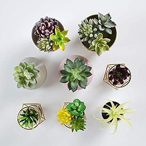 Convenient Creations Artificial Succulent Plants 14 pcs Faux Succulents, Fake Plants for Decoration, Shelf Decor, Wreath or Terrarium - Realistic Fake Succulents, Mini Air and Aloe Plant and More 2
