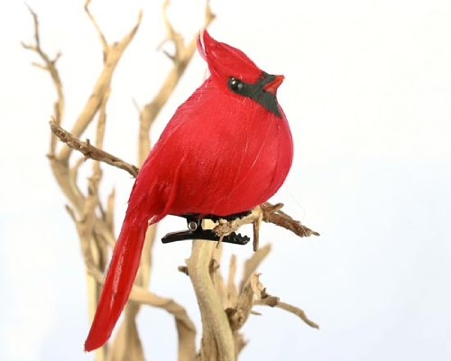 Factory Direct Craft Package of 12 Bright Red Artificial Cardinal Birds with Clips for Christmas Tree Ornaments