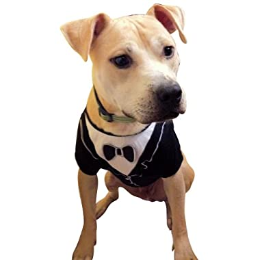 Dog Tuxedo, Frenchie Mini Couture (Medium)