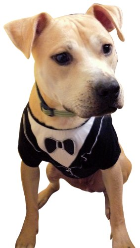 Dog Tuxedo, Frenchie Mini Couture (Small)
