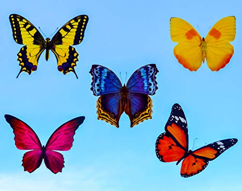 Butterfly Window Clings 20 X Anti Collision Decals To