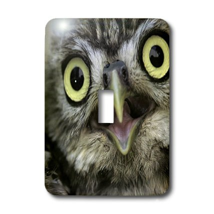 3dRose LLC lsp_9927_1 Little Owl, Athena Noctua, Aragon Spain Europe Single Toggle Switch by 3dRose