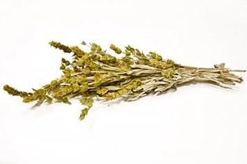 recipe: goldenrod tea amazon [31]