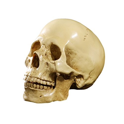 Realistic Human Skull Head Bone Model Halloween Costumes Hounted House Scary Creepy Prop Masquerade -
