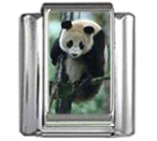 Stylysh Charms Panda Bear Animal Photo Italian 9mm Link AN053