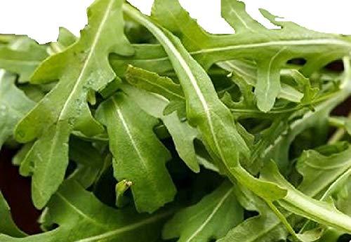 (2000 Rocket Arugula Seeds - Heirloom Lettuce Salad Leaf - Non GMO)