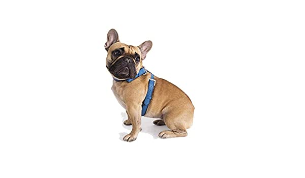 Cyriano Bellus - Arnés para Perro Tipo Bulldog Francés o Carlino ...