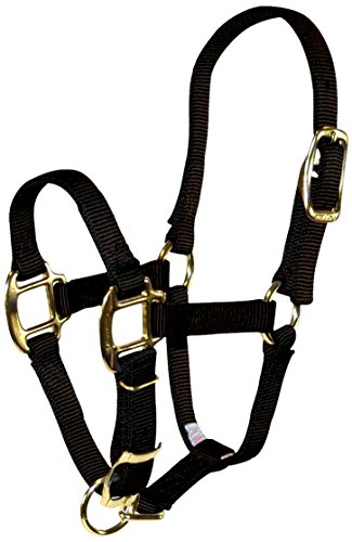 Hamilton 3/4-Inch Adjustable Quality Horse Halter, Pony or Average Miniature Donkey, (Miniature Horse Pony)