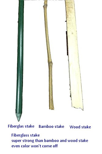 Wonderful Amazon.com : EcoStake, 1/4u0027u0027 X 60u0027u0027, Pack Of 20, Garden Stakes, Plant Stakes,  Tomato Stakes, Never Rust/rot, Better Than Wood Stakes And Bamboo Stakes,  ...