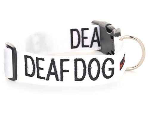 DEAF DOG White Color Coded L-XL Buckle Dog Collar (No/Limited Hearing) PREVENTS Accidents By Warning Others of Your Dog in (Deaf Dog)