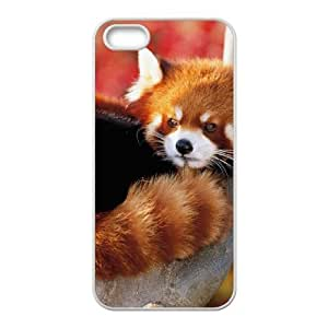 Creative Phone Case Ailurus fulgens For iPhone 5,5S W567625