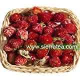 Sierra Tea Dried Globe Amaranth Flower (Herbal Tea 100g)