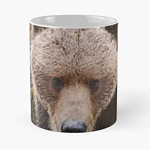 Katmai National Park Brown Bear Margaret Hyde - Best Gift Ceramic Coffee Mugs 11 Oz ()