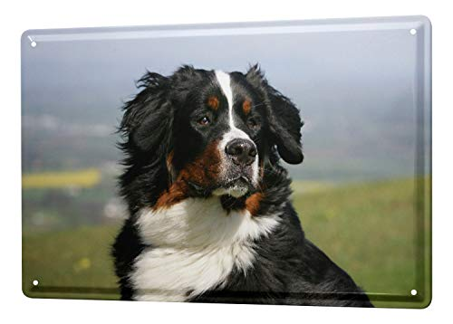 - LEotiE SINCE 2004 Tin Sign Metal Plate Decorative Sign Home Decor Plaques Breed Bernese Mountain Dog 8X12